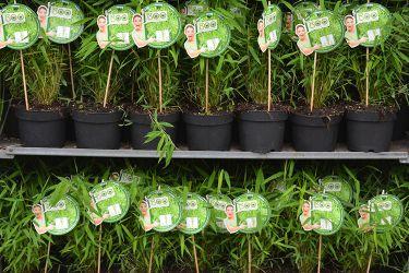 bamboe-klein