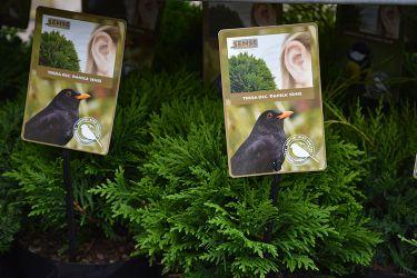 conifere-voor-vogels