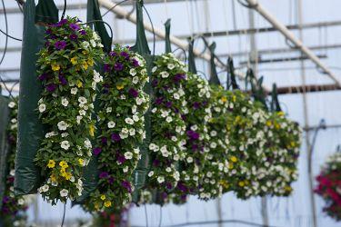 hangzakken-zomerbloemen