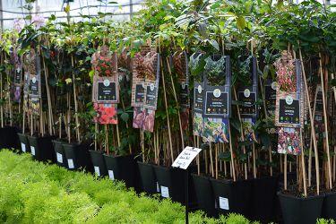 klimplanten-kopen