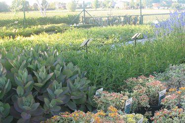 vaste-planten-vooraan