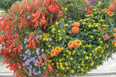 zomerbloemen-combinatie