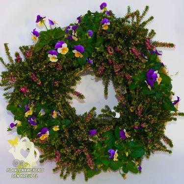 allerheiligen-winterheide-viooltjes