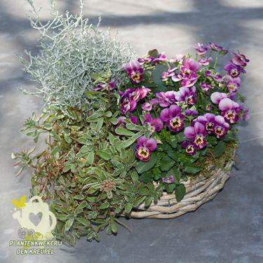 grafdecoratie-mandje-viooltjes