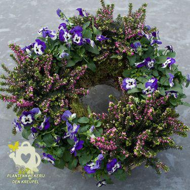 krans-winterheide-viooltjes-graf