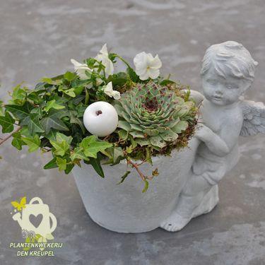 vetplantje-engel