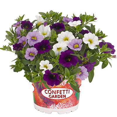 Calibrachoa Mix-(Confetti-Garden-Hawaiian-Sailaway)